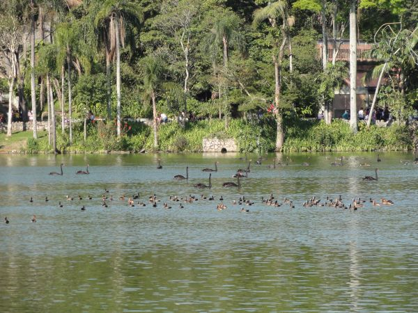 Lago principal