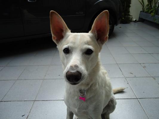 Essa bonitinha aqui é a Peggy, que chegou à família depois da Tilim e que recebe Catarina na casa da vovó