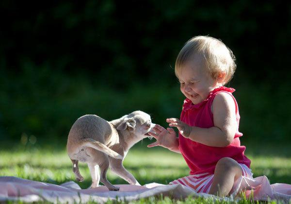 Imagem: http://www.blogdocachorro.com.br