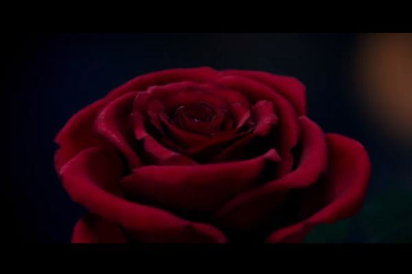 Disney lança primeiro trailer de A Bela e A Fera, o novo filme (lindo!!!)