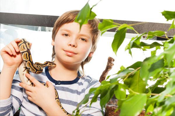Picadas de bichos peçonhentos (sim, podem acontecer!): saiba o que fazer e como se proteger