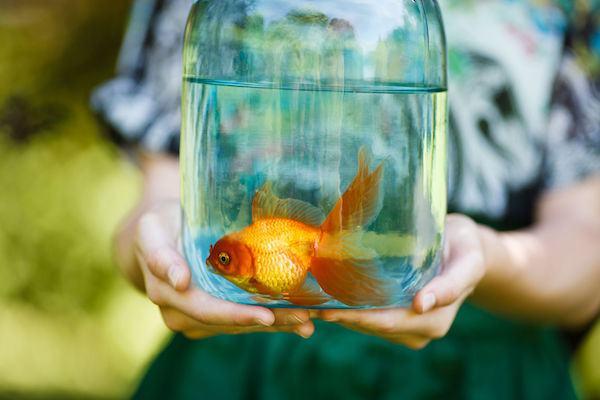 Dicas para você escolher um peixe para o seu filho (nós estamos curtindo muito!)