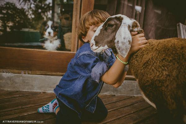 O (fofo) ensaio da criança com sua ovelha de estimação