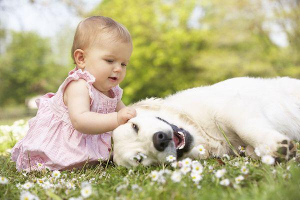 Cães se mostram aliados contra alergia e obesidade em bebês