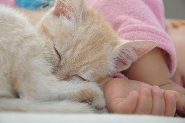 Estudo mostra que conviver com gatos na infância diminui risco de asma