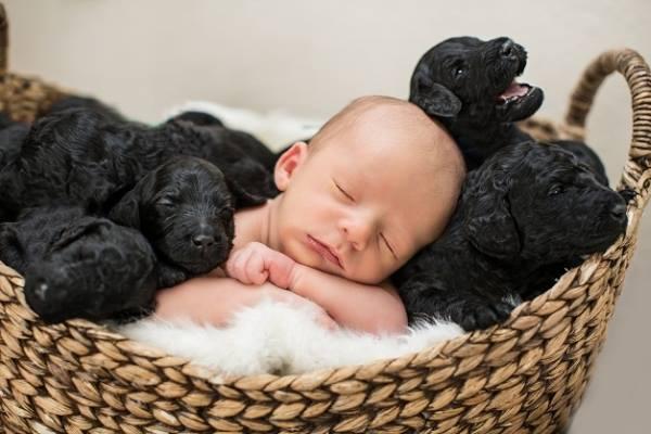 Mãe dá à luz no mesmo dia da sua cachorrinha (veja as fotos, você vai morrer de amor!)