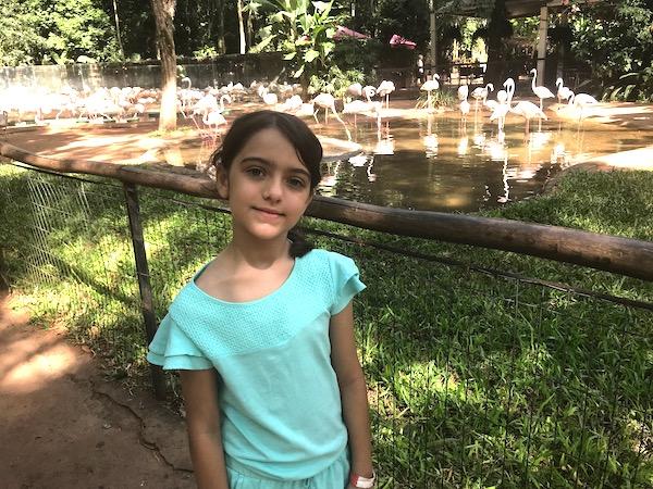 Parque das Aves: um dos passeios mais incríveis de Foz do Iguaçu!
